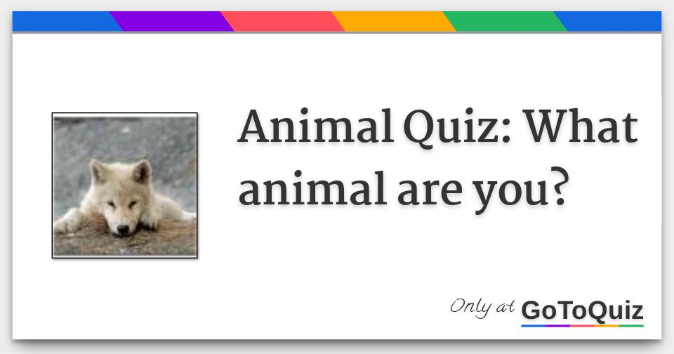 Animal Quiz: What animal are you?