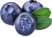 Your Blueberry Gum Experience